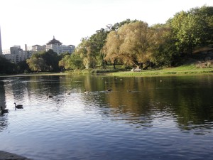 A lake in Central Park